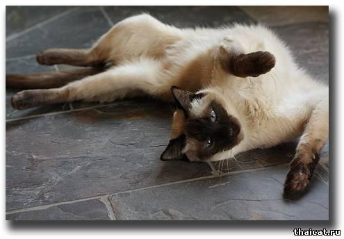 Как сделать.чтобы кошка во время течки не орала?